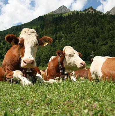 Mag Dierenwelzijn wat kosten?